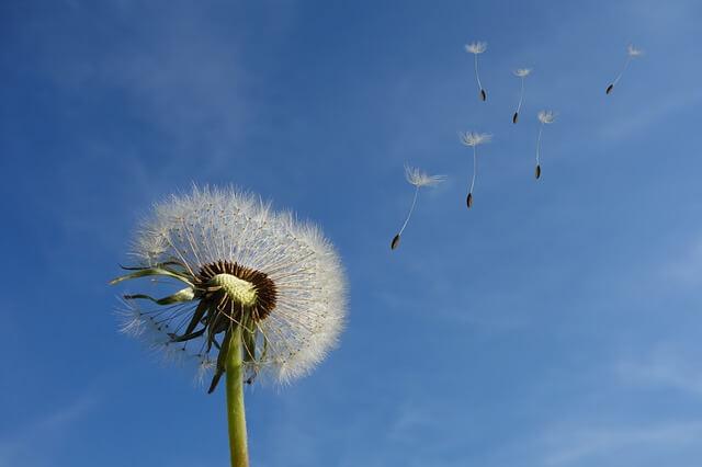 pollen allergy treatment